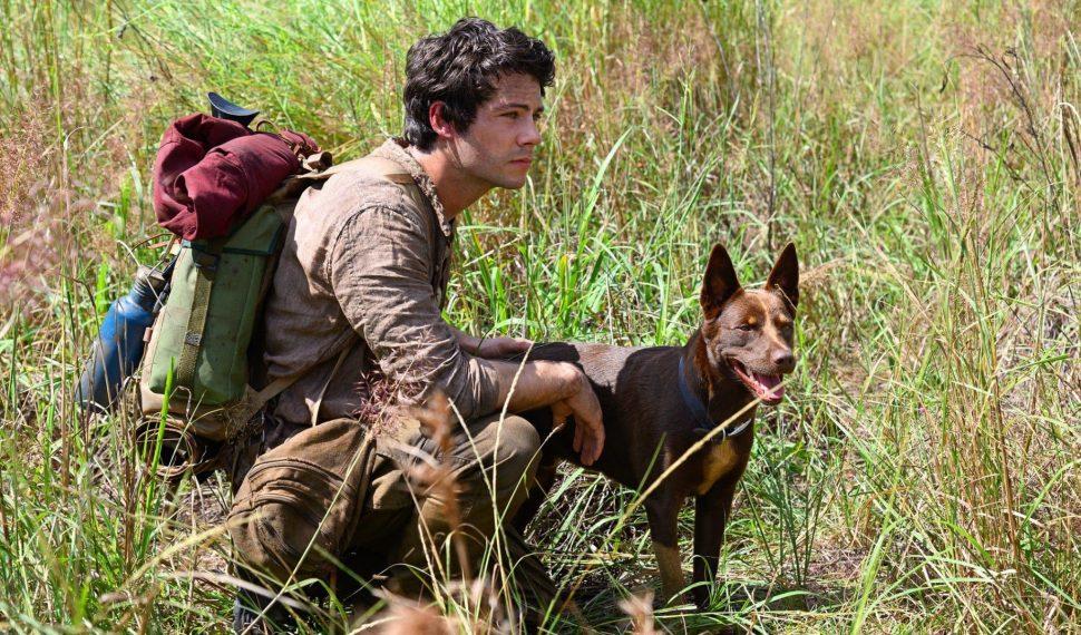 """""""Love and Monsters"""", su Netflix il viaggio di un ragazzo insicuro durante la fine del mondo"""